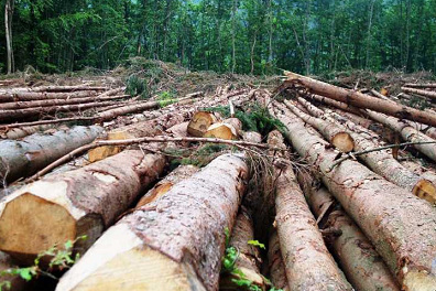 Essay deforestation its impact environment